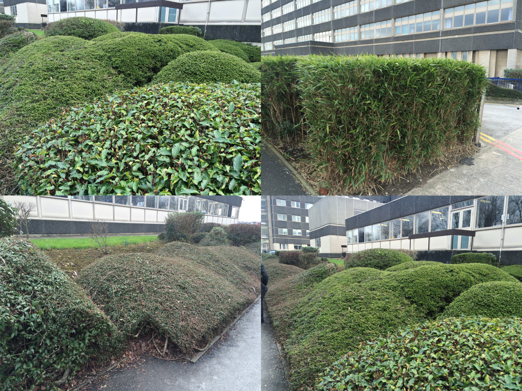 Zen-like barrier planting at Tameside Hospital. Image: Christopher Tipping