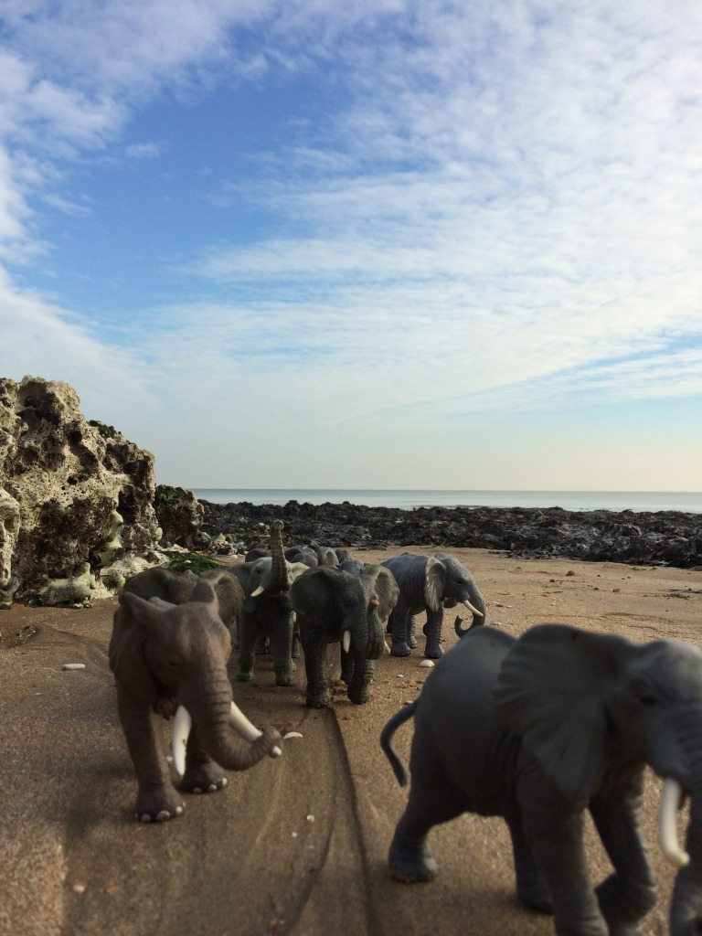 Animal Thanet - Elephant Walk from Ramsgate to Broadstairs. Image: Christopher Tipping